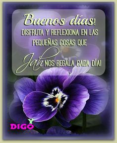 Buenos Dias! Good Night, Decir No, Thoughts, Humor, Quotes, Christian Living, Little Things, Beautiful Images, Quotes Positive