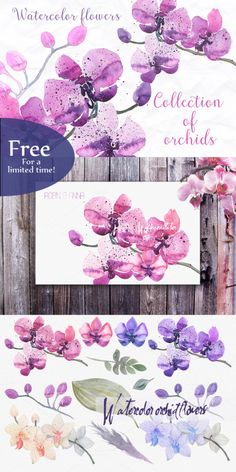 free watercolor flower orchids-featured at FPTFY