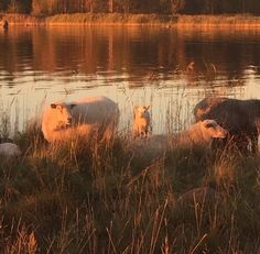 Leonora.fi: Babynest med ullstoppning. Men varifrån kommer ull...