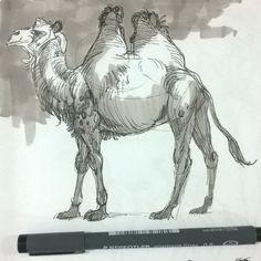 Sketch from class #icsart #drawing #animaldrawing #sketch #art #fun