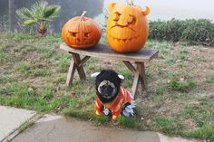 """""""You're the monster for doing this to me and my pumpkin friends."""""""