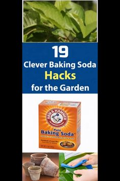 Do you know you can use baking soda for plants? Here are 19 hacks that will teach you how to use baking soda in the garden effectively. Baking soda is used i. Baking Soda Beauty Uses, Baking Soda Uses, Baking Soda Benefits, Baking Soda Vinegar, Baking Soda Shampoo, Cider Vinegar, Baking Soda And Honey, Baking Soda For Hair, Veg Garden