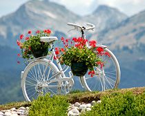 So calming  Pretty white bicycle with flowers