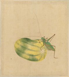 Grasshopper and Melon from the album Birds and Flowers 花卉草虫小禽図  Japanese Edo period first half of the 19th century Artist Unknown, Japanese