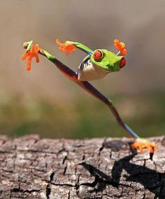 Nueva especie de rana. Encontrada en las remotas selvas de Madagascar, la han llamado Kung-Fu Frog. visto en http://bit.ly/zJKHl8