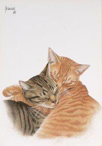 francien katten - Google zoeken