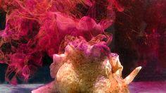 Sea Hare Ink Is One of Nature's Most Unusual Bioweapons  @io9 #seahare @josephbcastro #bioweapons