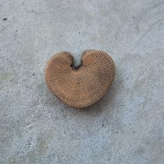 Love Heart  shaped by Brother Tree worked further by NaturesArtMelbourne,