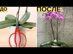 И Ваша орхидея будет цвести круглый год. 7 важных секретов по уходу за орхидеями - YouTube Garden Plants, Indoor Plants, House Plants, Garden Projects, Plant Hanger, Container Gardening, Garden Design, Glass Vase, Home And Garden
