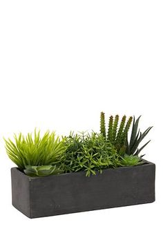 "These realistic succulents, planted in a ceramic slate like window box is understated and everlasting. It will look great in any room or on the veranda.<div class=""pdpDescContent""><BR /><b class=""pdpDesc"">Dimensions:</b><BR />L24xH15 cm</div>"