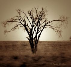 Antoine de Saint-Exupéry And I – A Tree | Simple Pleasures