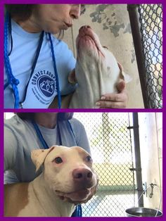 Urgent Dogs of Miami  Clyde like you've never seen him and I won't stop posting till he's out the door!! So much potential in this boy and all his pics have him cowering in a corner! He's 2 yo, neutered, healthy and very capable of giving and receiving love.#A1554927terrier mix. DUE OUT 12/23. Pleaseeee give Clyde a chance! In the west wing at MDAS  10427287_920535287980875_2383338113879577609_n.jpg (576×767)…