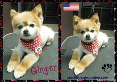 Groomed at Pretty Paws LLC, Radcliff Ky www.radcliffpetgrooming.com