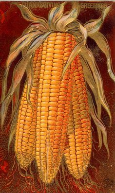 vintage thanksgiving Images Free | Vintage Thanksgiving Postcard