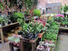 Rolling Greens greenhouse featured on @Martha Stewart's blog.