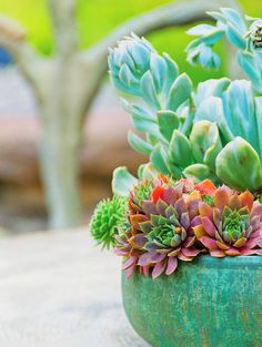 Succulents, a big trend for 2013