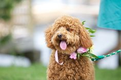 In LOVE with this dog! On #SMP: http://www.stylemepretty.com/massachusetts-weddings/2013/11/11/peaks-island-maine-destination-wedding-from-lara-kimmerer-photography/