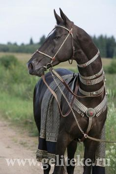 Horse looks so cool! Akhal Teke horse with ornate colors.