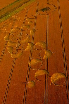 Crop Circle, Wiltshire, England