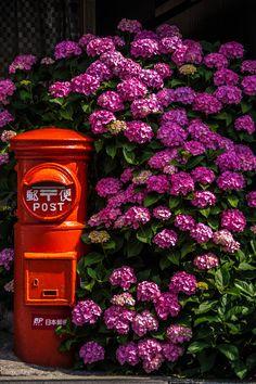 Hydrangea and post at Kamakura, Japan 鎌倉 力餅屋 Kamakura, Henri Matisse, Hortensia Hydrangea, Hydrangeas, Photos Voyages, Japanese Beauty, Japanese Style, Nihon, Japanese Culture