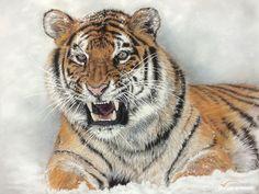tijger-portretinbeeld.jpg 945×709 pixels