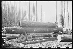 Tillamook gyppos.-- Loading logs onto truck for transportation to mill. Gyppo logging operations, Tillamook County, Oregon. The small, independent loggers are called gyppos.  1941 Oct.