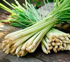 Growing Lemongrass   10 Vegetables You Can Grow From Scraps