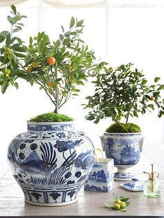 Citrus in blue and white porcelain. Love the moss mounds making them feel as if they are in the ground.