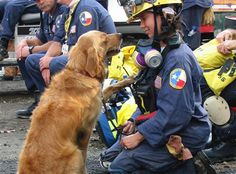 The last known rescue dog who worked at 9-11 Ground Zero passed away in June…