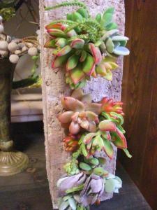 Hypertufa Pots with succulent plant