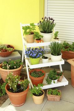 Create a Charming Collection / Armstrong Garden Centers