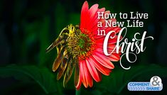 Are you ready for a whole new life in Christ? Are you prepared to stop living under circumstances and begin living above them? That's what is available to you as a believer. Whether you are new to the Christian faith or new to living by faith, your covenant rights as a believer allow you to…Category: FaithBuilders  Read More