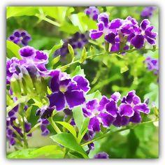 summer's purple.. #nature #plants #florida #befunky