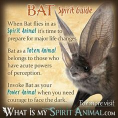 The most in-depth Bat Symbolism & Bat Meanings! Bat as a Spirit, Totem, & Power Animal. Plus, Bat in Celtic & Native American Symbols and Bat Dreams, too! Spirit Animal Totem, Animal Spirit Guides, Your Spirit Animal, Animal Meanings, Animal Symbolism, Power Animal, Animal Magic, Murcielago Animal, Spiritual Animal