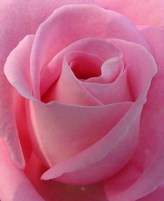 House of roses - Tipps zur Avenida Paulista - Casa das Rosas – Tipps zur Avenida Paulista, -