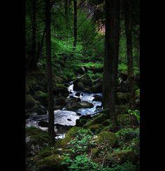 Black forest photos