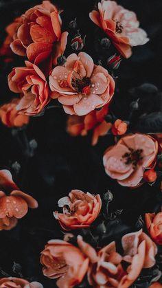 Flower Phone Wallpaper, Iphone Background Wallpaper, Aesthetic Iphone Wallpaper, Of Wallpaper, Wallpaper Quotes, Easy Flower Painting, Flower Painting Canvas, Flower Aesthetic, Pink Aesthetic