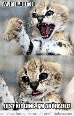 Funny kittten
