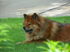 My dog Meeko.  <3