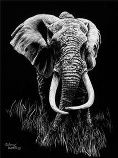 elephant_scratchboard.png (448×600)