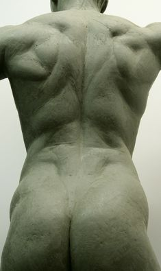 torso-back