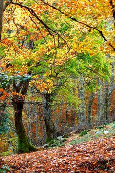 Parco delle Madonie, Sicily, Autumn