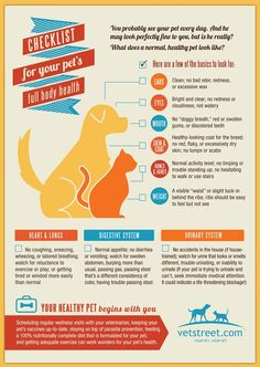 Minor changes can indicate medical issues that call for a vet visit. Here are some things to watch out for.