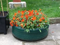 An old tyre used as a planter!