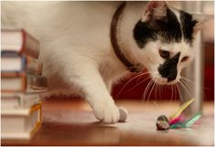 Top 10 Fun DIY Cat Toys - Top Inspired