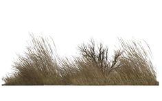 Winter Vegetation Rendered in Poser Pro 2012