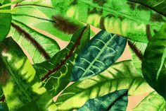 Markisen- und Outdoor-Stoff Spain Sun Dschungel