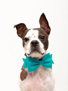 Girl Dog Bow - Wool Felt Dog Accessories $9.95, via Etsy.