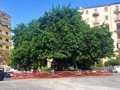 Capri Event – Napoli, piazza degli Artisti: la Phytolacca prima e dopo l'intervento