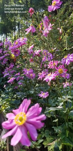 In the garden today. It's sunny, the birds are singing and the flowers are blooming. Bliss! Holiday Apartments, Romantic Couples, Bliss, Emerald, Singing, Clouds, Garden, Artist, Flowers